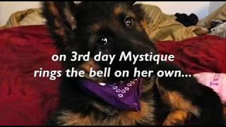 Mystique Ringing the Bell (Potty Training)