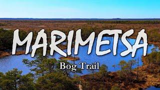 Marimetsa BOG TRAIL - Nature in Estonia | Тропа Мариметса | Eesti loodus