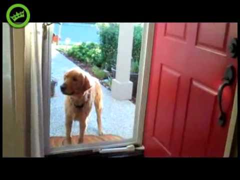 Dog vs Glass door & Dog vs Glass door - YouTube