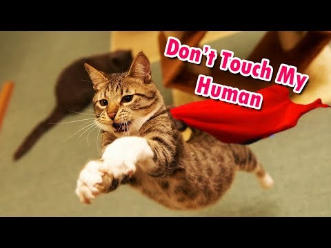 10 Kucing Penyelamat Nyawa Manusia, Kamu harus Tahu