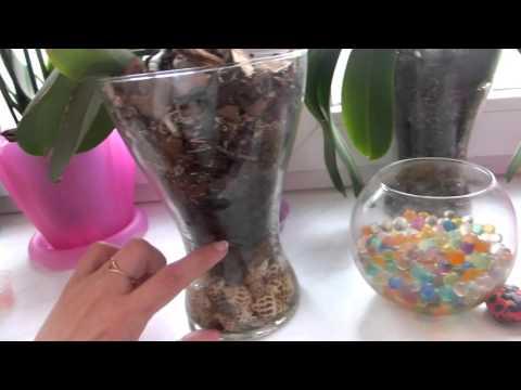 Мои орхидеи в стеклянных вазах. Положительный результат.