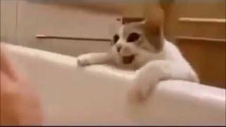 Кошка думает, что хозяйка тонет в ванной Ее реакция покорила Интернет!