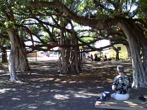 Banyan Tree Park Lahaini Maui Thanksgiving Afternoon 2007