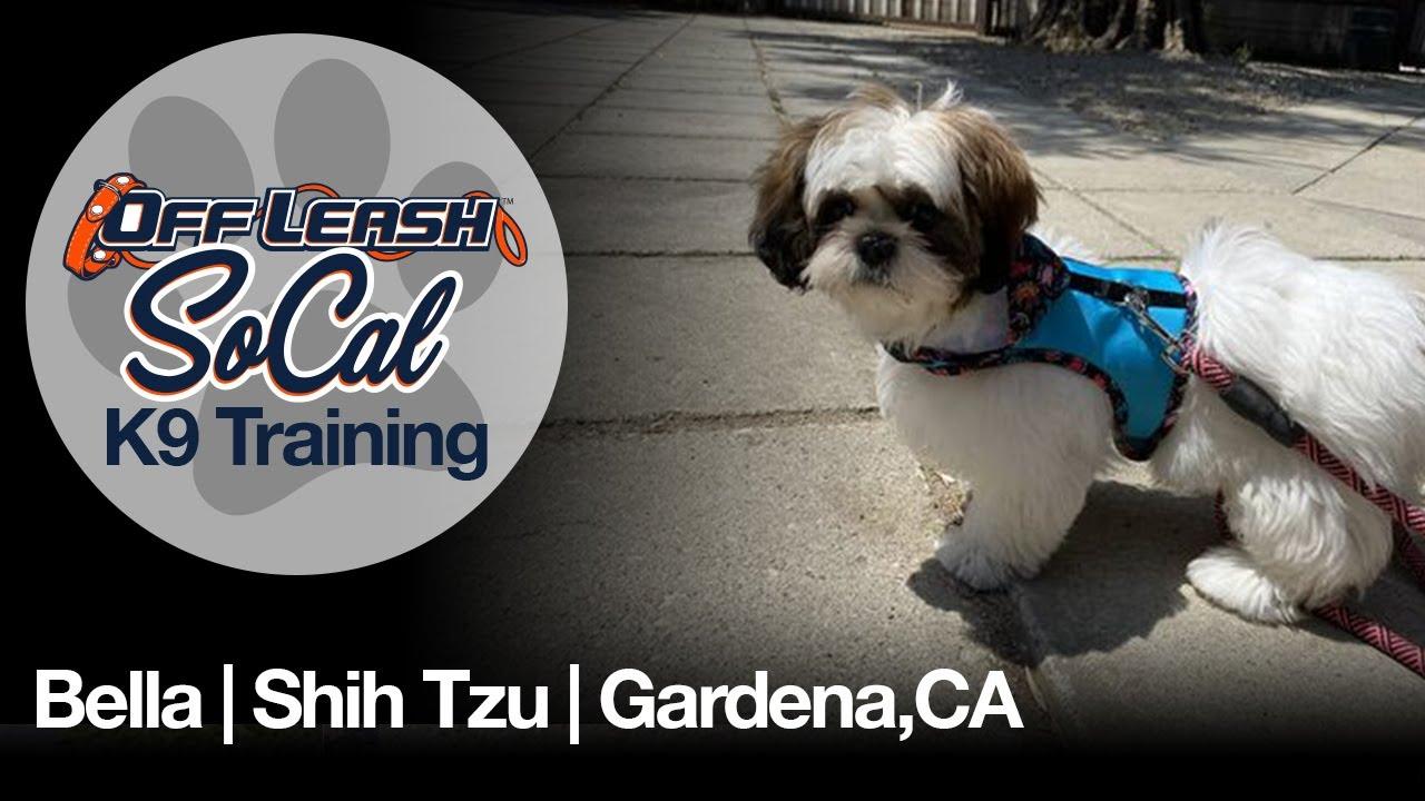 Bella | Shih Tzu | Gardena, CA
