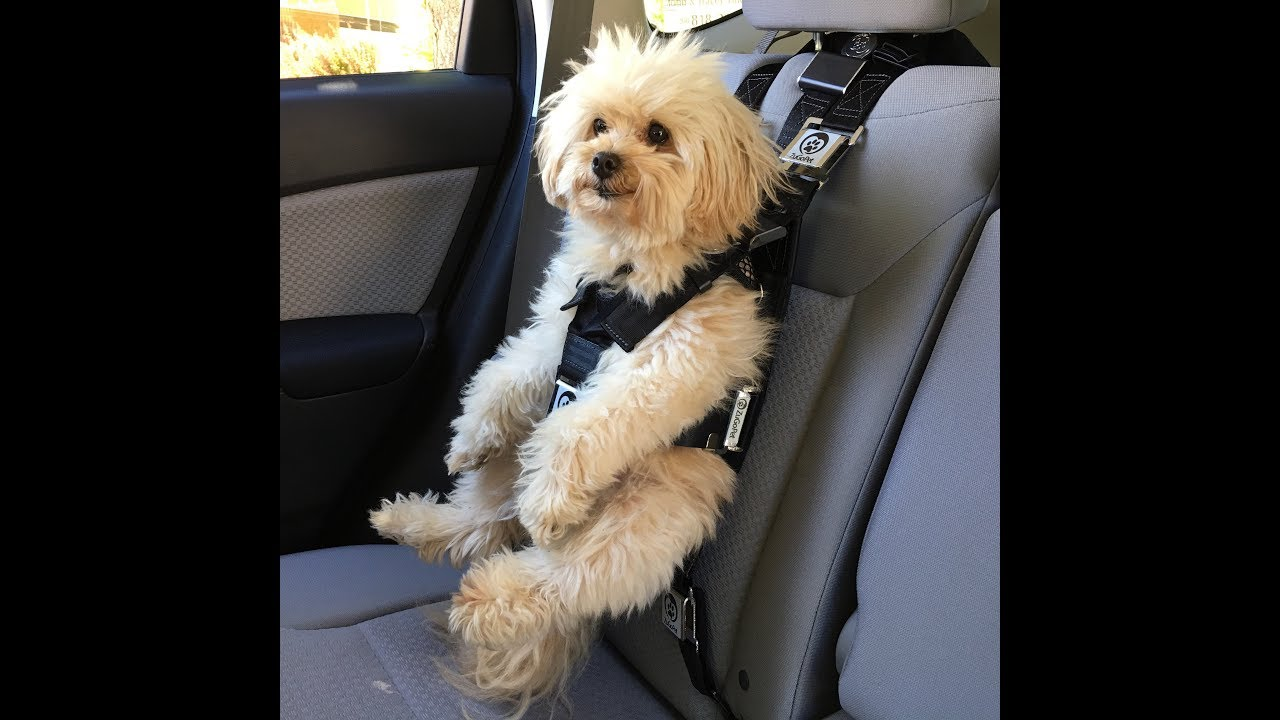 How To Install The Rocketeer Pack Dog Car Seat By ZuGoPet