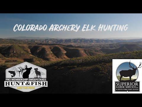 Colorado Elk Hunt With Superior Guide Service
