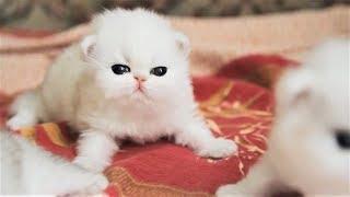 Смешные животные Коты присутствуют Домашние животные - Сочные приколы (2019) МатроскинТВ