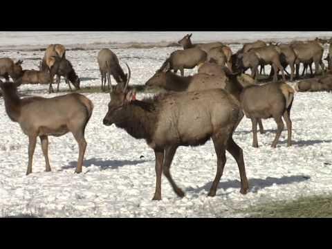 Hardware Ranch - Hyrum Utah - Sleigh Ride
