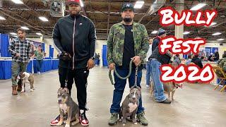 XL Bully: Bully Fest 2020 Allentown,PA