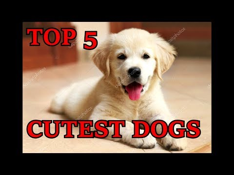Top 5 cutest dogs || cutest puppies in the world || best dogs breeds
