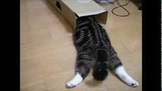 《我是Maru,我是紙箱控》滑壘衝箱是Maru的樂趣