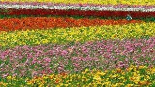 Farmgirl Flowers: A fierce business model for flowers