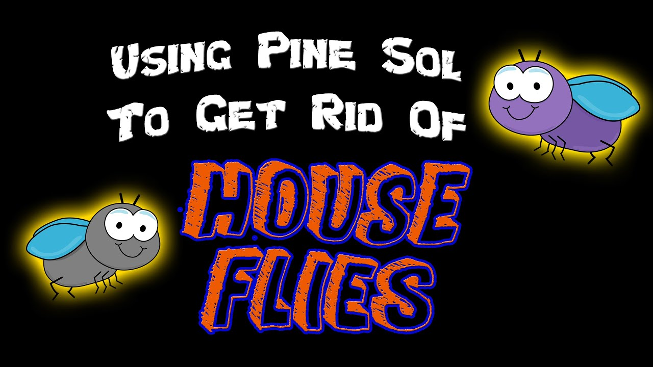 DIY | Using Pine Sol to Get Rid of House Flies