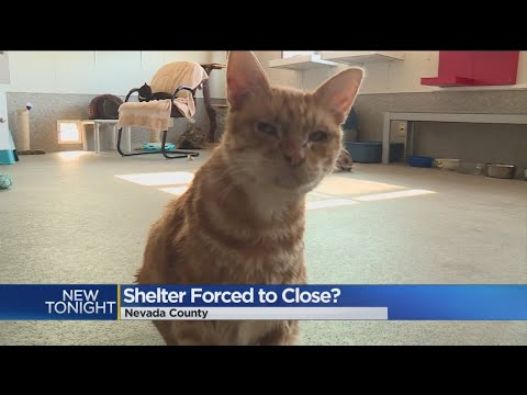 Fate Of Nevada County Animal Shelter Draws Concern
