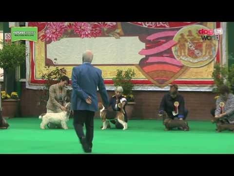 Birmingham National Dog Show 2017 -  Hound group