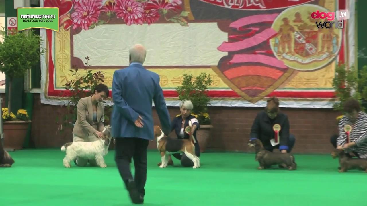 National Dog Show Hound Group