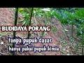 Budidaya Porang Tanpa Pupuk Dasar  Mp3 - Mp4 Download