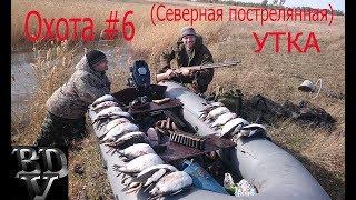 видео Cнаряжение для охоты на гусей и уток