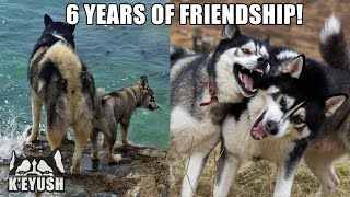 How My Husky Met His Best Friend! Amazing 6 YEAR Friendship!