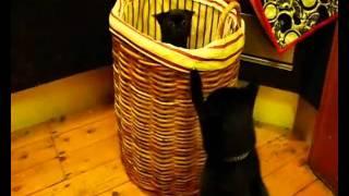 Washing basket blues