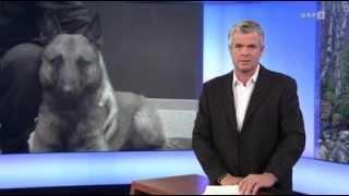 Ein Polizeihund des EKO Cobra bei Einsatz in Steyr getötet