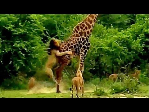 Lions VS Giraffe Fight to the death thumbnail