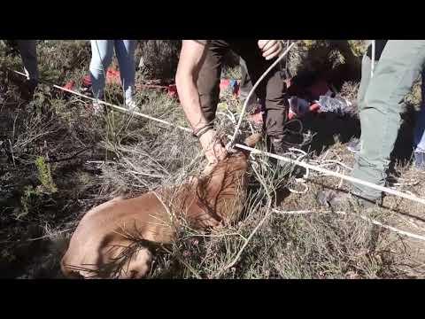 Rescate de dos perros por los Bomberos de Ponferrada.