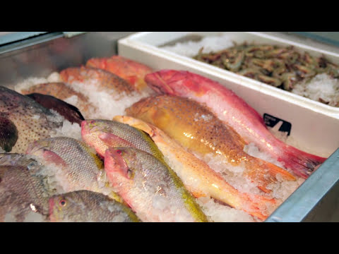 Branding For Success - Song Fish Dealer