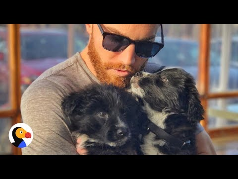 Guy Finds Puppies on Desert Road Trip | Dodo Hero