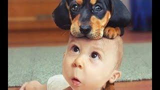1.「絶対笑う」最高におもしろ犬,赤ちゃん,動物のハプニング, 失敗画像...