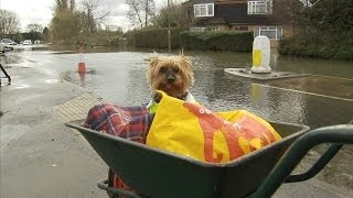 Yorkshire Terrier In Hi-vis Jacket Rescued From Flood Waters In Staines