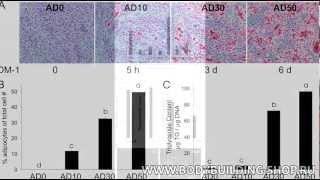 CLA - conjugated linoleic acid