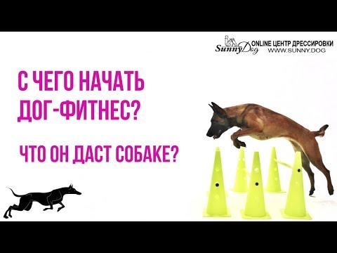 видео: С чего начать дог фитнес? Что он даст собаке? Можно ли заниматься в домашних условиях ?