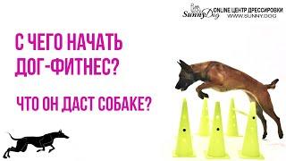 С чего начать дог фитнес? Что он даст собаке? Можно ли заниматься в домашних условиях ?