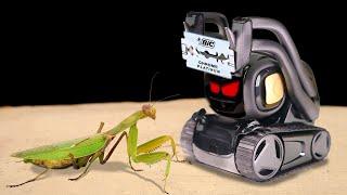 THE ROBOT KILLER ANKI VECTOR VS MANTIS! ARTIFICIAL INTELLIGENCE AGAINS MANTIS