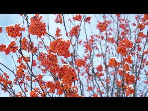 Удивительная питерская осень. Парк Сосновка
