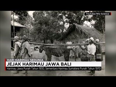 Jejak Harimau Jawa Bali - Hari Harimau Sedunia