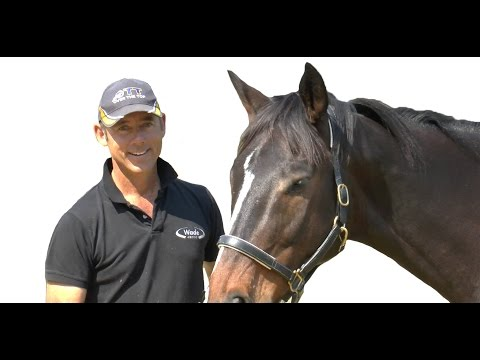 Magnesium And Your Horse - Too Much Vs Too Little