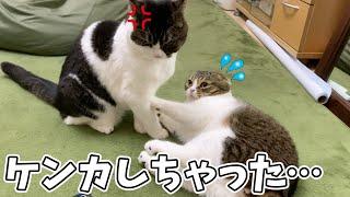 喧嘩してもすぐ仲直りする親子猫