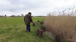 Sussex Spaniels do the ditches 'O'...