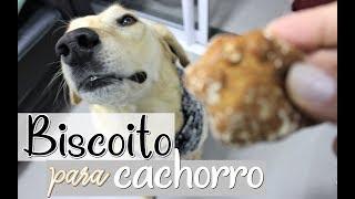 biscoito caseiro para cachorro receita