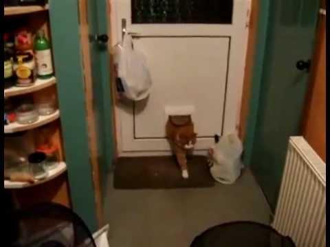 Дверь для кота фото