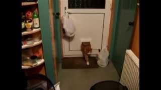 Толстый Кот и Дверь Для Кошек