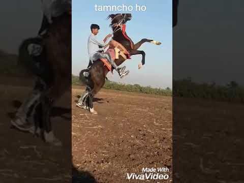 Ahir___@#iરાni___ |ahirani na kapde | jaY murliDhar | Ahirat | culturl video | horse lover |tamancho