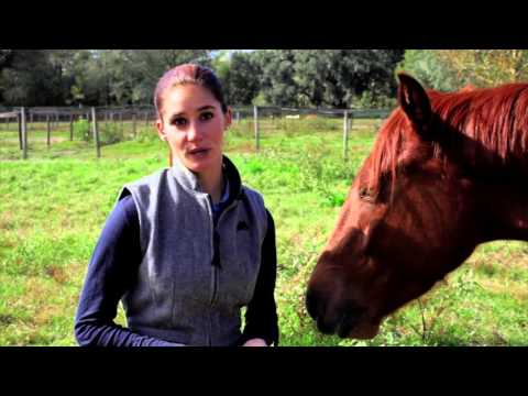 Changing the way you greet horse goes a long way youtube changing the way you greet horse goes a long way m4hsunfo