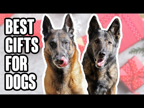 The Absolute Best Gifts for Dogs -2020