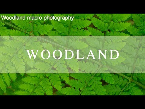 Nature Photography | Woodland