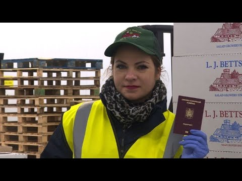 'Voices of Brexit' - the Romanian UK farmworker