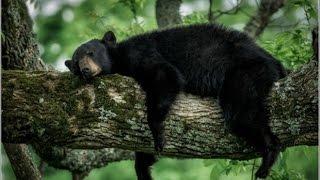 Blowjob Bear