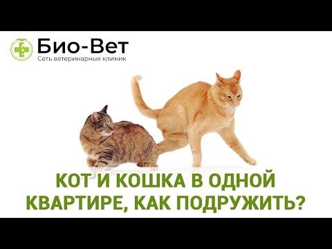 Как сдружить кота и кошку